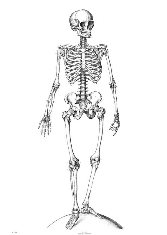 Nostromo_agence-de-communication_blog_10-faits-divers-squelette.jpg